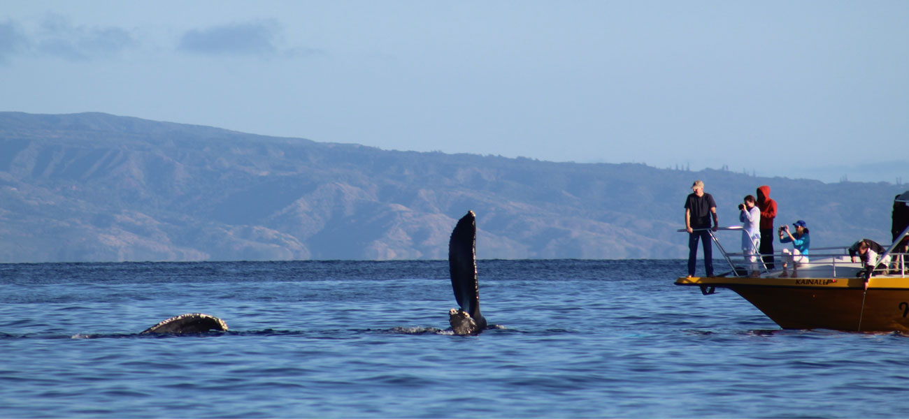 whale watching trips by hunt fish trek