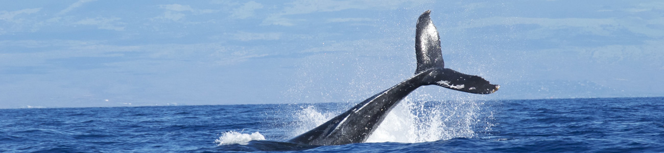 whale watching with hunt fish trek on the coast of hermanus